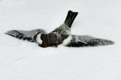 03_frederiquedebruijn-sneeuwval