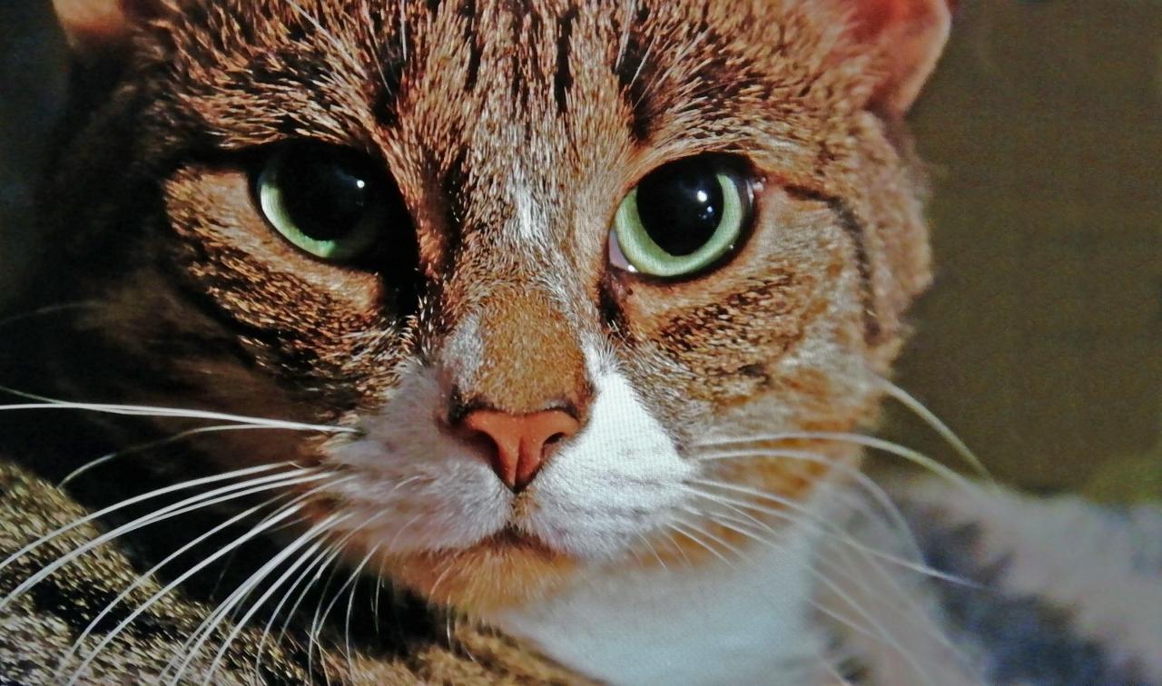 2.-George-Kattenportret