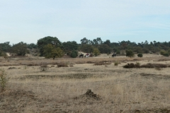 sized_Druunse duinen Hay