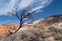 Twan-Woestijn